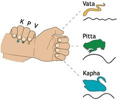 Vatta, Pitta, Kapha Pulse Diagnosis of Ayurveda