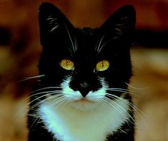 Black pussy cat, white bib beautiful eyes, seeks owl for pea pod voyage by Alan Mattison IPA. Just like my Spatz! jg
