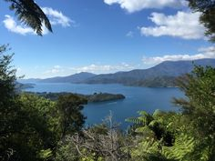 Queen Charlotte Track is jungle, mountain, cattle field, ocean-cliff, coastal tramp.The ocean gleams bright aquamarine. Trees and ferns hang over head. The track winds over hills and along cliffs and beside beaches. Birds call, waves lapp. Runners from Anakiwa pass us as they train- some are ultramaratoners, some just enjoy the scene. The track weaves inland and back out to ocean views.