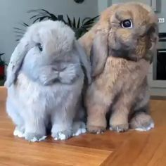 These 15 Hilarious Animal GIFs Will Make You LOL All Day Long Pets have a way of making life hilariously unpredictable with their adorably strange habits. Cute Wild Animals, Cute Little Animals, Cute Funny Animals, Animals Beautiful, Animals And Pets, Farm Animals, Beautiful Creatures, Cute Baby Bunnies, Cute Babies