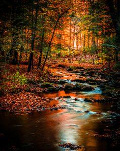Sunset at Kooser Run - Kooser State Park, Pennsylvania