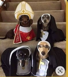 Dachshund Costume, Dachshund Funny, Dachshund Puppies, Dachshund Love, Funny Dogs, Cute Puppies, Cute Dogs, Daschund, Dapple Dachshund