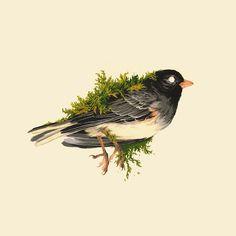 Bird Sketch Tattoo Art Prints 41 Ideas For 2019 Abstract Drawings, Animal Drawings, Art Drawings, Bird Tattoo Back, Bird Sketch, Mo S, Bird Prints, Tattoo Sketches, Pretty Art