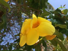 Yellow Mexican flower Mexican Flowers, Flower Photos, My Photos, Bouquet, Yellow, World, Plants, Life, Bouquet Of Flowers