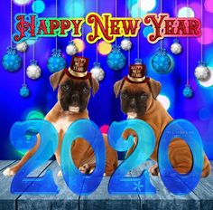 Happy New Year 2020 - Megaport Media Share Pictures, Animated Gifs, Happy New Year 2020, Evo, Boxer, Boxer Pants