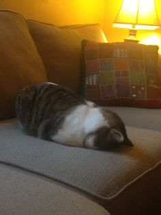 """""""Nope, nope. No catting for today."""" 