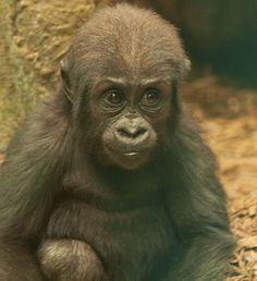 Baby Kambiri. How precious...