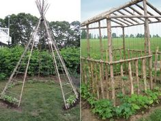 Haricots à rames Garden Structures, Outdoor Structures, Potager Bio, Edible Plants, Botany, Agriculture, Home And Garden, Gardening, Sweet