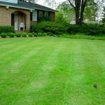 Green Herbicides and Pesticides for your Yard. Great non toxic weed killer.