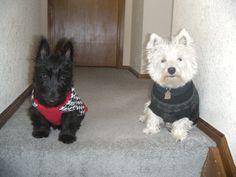 Chloe and Gracie