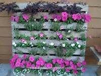 pallets plantenbakken - Bing Afbeeldingen