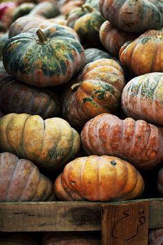 nature | autumn - fall colors