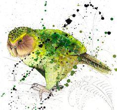 Limited Edition Fine Art Print Kakapo Birds Wildlife by JaneLaurie