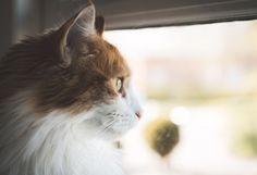 [フリー写真] 猫の横顔