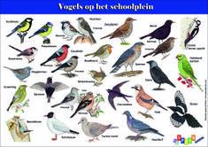 vogels-op-het-schoolplein-a4-gratis-download