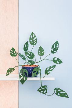 DIY Monstera obliqua de papel - Diys Home Decor Paper Leaves, Paper Flowers, Potted Plants, Indoor Plants, Hanging Plants, Monstera Obliqua, Plantas Indoor, Room Deco, Paper Plants