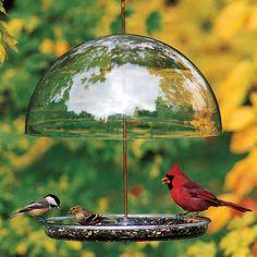 Dorothys Cardinal Feeder