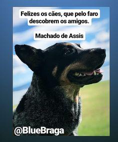 Felizes os cães que pelo faro descobrem os amigos.... Cattle, Nova, Stuff To Buy, Animals, Happy, Frases, Friends, Gado Gado, Animales