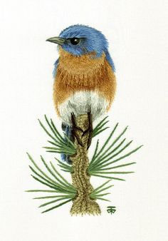 Eastern Blue Bird Needle Painting or Thread Painting Hand Embroidery by Tanja Berlin: Berlin Embroidery Designs. Long and short surface embroidery stitches worked in DMC embroidery cotton on Southern Belle muslin fabric. Hand Embroidery Kits, Silk Ribbon Embroidery, Crewel Embroidery, Cross Stitch Embroidery, Embroidery Patterns, Machine Embroidery, Brazilian Embroidery, Thread Painting, Embroidery Techniques
