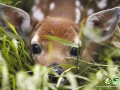 What a cute little doe