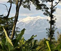 Oft hinter einem Wolkenschleier verdeckt schlummert der höchste Berg Afrikas in Tansania - der Kilimandscharo.