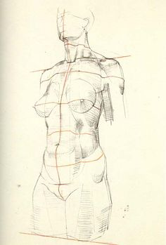 In the second stage of both portrait drawing and figure drawing, we are concerned with the construct of the internal anatomy. The first an...