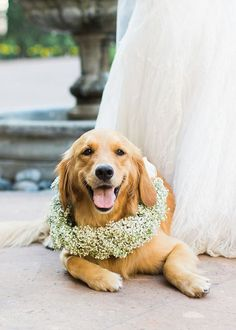 This golden retriever is ready to give away the bride | Wedding Pets