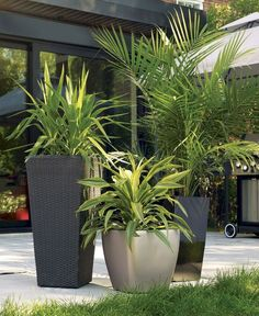 Unique Modern Precast Planters To Make Your Outdoors Stylish Palmeras in cemento macetas Tropical Garden Design, Modern Garden Design, Landscape Design, Tropical Plants, Tropical Backyard, Contemporary Garden, Outdoor Planters, Outdoor Gardens, Modern Planters