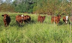 La organización de la jornada, estuvo a cargo del Grupo Ganadería Subtropical de la EEA Corrientes, la Secretaría de Agricultura Familiar delegación Corrientes y el Programa Plan Ganadero del Gobierno de la provincia. A partir del vínculo permanente