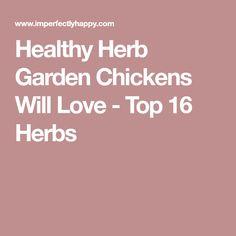Healthy Herb Garden Chickens Will Love - Top 16 Herbs