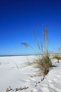 Panama City Beach Florida - pcbeachdailyphoto.wordpress
