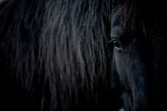 Black horse photography print  Friesian by WildnisPhotography, $22.80
