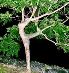 Tree pose...This reminds me of that one woman dressed as mother earth at Animal Kingdom. She pops up every once in a while and poses and you never notice she's there until she moves.