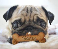 Pug Parent Profile | Jasmine http://www.thepugdiary.com/pug-parent-profile-jasmine/