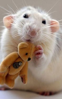 6 | These Photos Of Rats Holding Teddy Bears Will Make You Kinda Love Rats | Co.Design | business + design