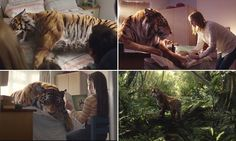 Heart-warming WWF advertisement shows family helping an injured tiger