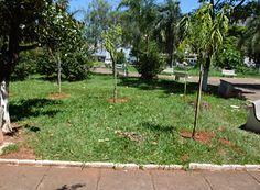 Prefeitura de Passos planta árvores na cidade http://www.passosmgonline.com/index.php/2014-01-22-23-07-47/geral/9601-prefeitura-de-passos-planta-arvores-na-cidade