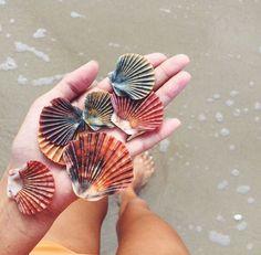Blushedcreation seashells, starfish, summer feeling, summer of love, Summer Feeling, Summer Vibes, Summer Of Love, Summer Beach, Summer Sun, Pink Beach, Summer Goals, Hello Summer, Ocean Beach