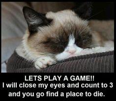 Grumpy Cat catching a few ZZZs.awww, Grumpy IS sweet. Grumpy Cat Quotes, Funny Grumpy Cat Memes, Funny Cats, Funny Animals, Cute Animals, Grumpy Kitty, Funny Memes, Jokes, Kitty Kitty