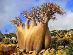 Essa ilha tem algumas das mais estranhas formas de vida na Terra
