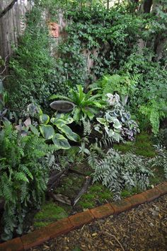 A small shady space became a hidden garden filled with hardy and tropical ferns, Hosta, Moss and a variety of woodland plants...