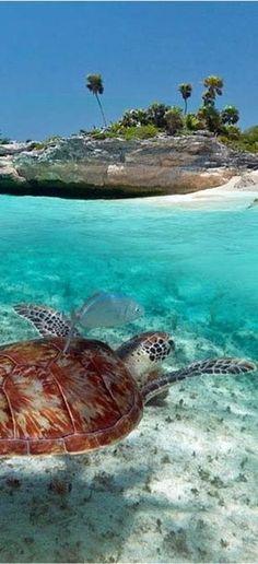 Cozumel, Mexico ~ Turtle ~