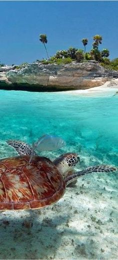 Cozumel, Mexico ~ Turtle ~