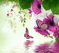 Spring pinks #butterfly