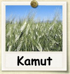 Non-hybrid Kamut growing guide.