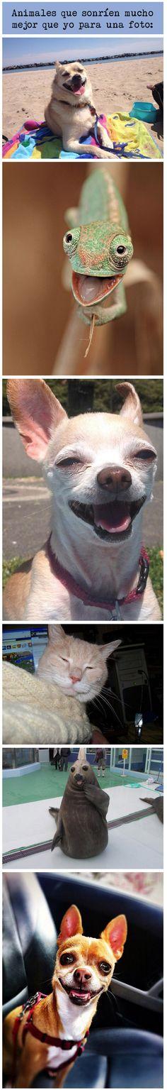 Animales que sonríen mucho mejor que yo para una foto.
