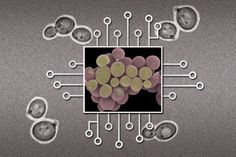 THE BIOLOGICAL MICROPROCESSOR on Flipboard