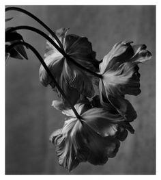 Photography by Christian Coigny