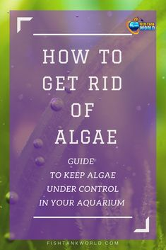 If you are struggling to get rid of algae in a fish tank this guide is for you. We have covered the basics to know and understand algae, which are the good algae to have and which are the bad algae you want to avoid, the best ways to prevent algae to proliferate in your aquarium.