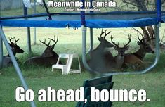 Meanwhile in Canada . go ahead, bounce. Canada Jokes, Canada Funny, Canada Eh, Canadian Memes, Canadian Things, Canadian History, Summer Humor, Funny Summer, Meanwhile In Canada